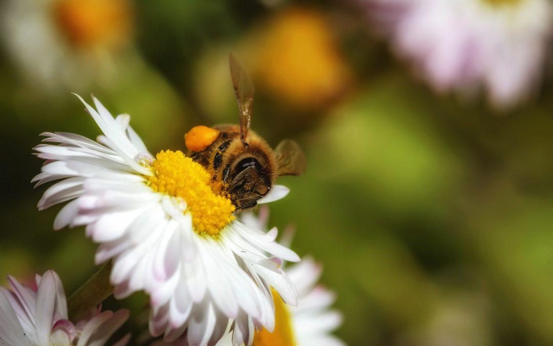 Bienensterben stoppen!