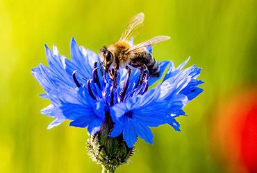 »Würden alle Bienen sterben, hätten wir Menschen höchstens noch vier bis fünf Jahre zu leben«